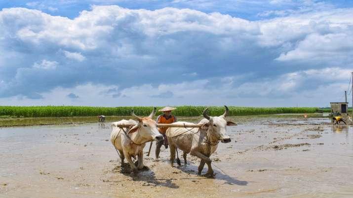 nitin gadkari launches Vedic paint soon to improve villager farmers economy । Vedic Paint: इस तरह कि- India TV Paisa