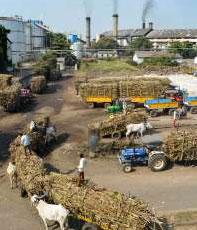 चीनी उत्पादन 31...- India TV Paisa