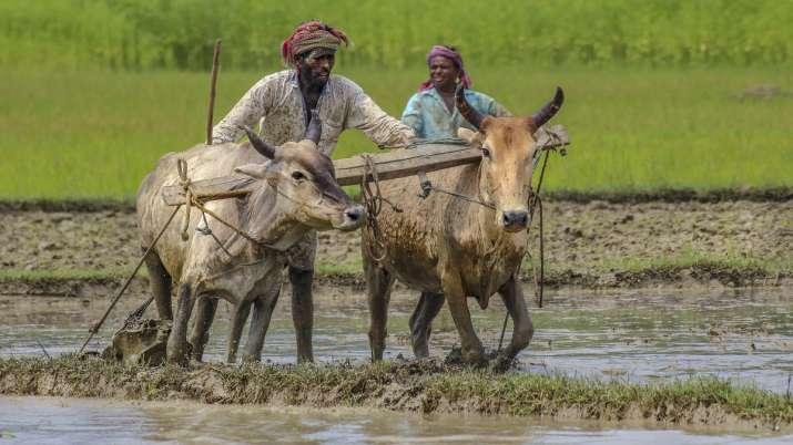 farmer wheat msp biometric system to be used in uttar pradesh bihar rajasthan odhisha किसानों तक सीध- India TV Paisa