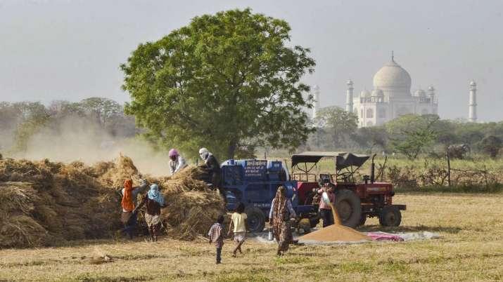 गेहूं की कटाई 81...- India TV Paisa