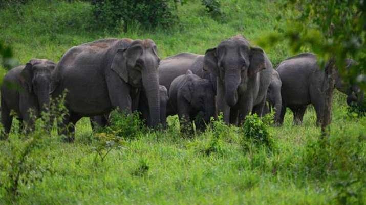 हाथियों के आतंक से...- India TV Paisa