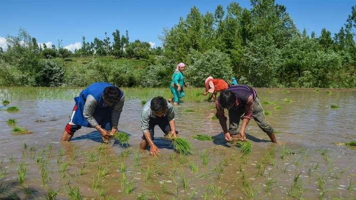 किसानों को दोहरा...- India TV Paisa
