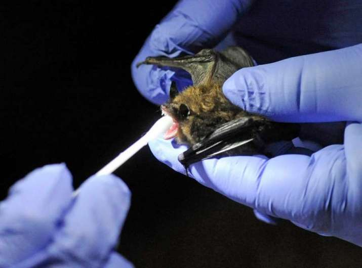 Many viruses that spread easily to humans were found in the bats of Switzerland