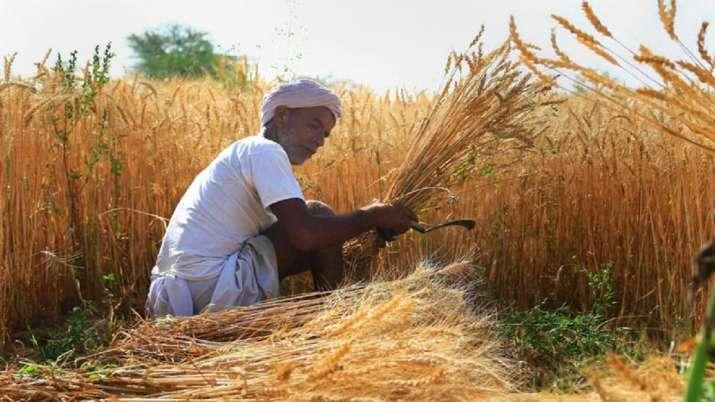 सरकार ने इस साल MSP पर 82,648 करोड़ रुपए में रिकॉर्ड 418.47 लाख टन गेहूं खरीदा- India TV Paisa