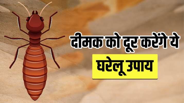 Best Home remedies for Termite control Dimak ko bhagane ka gharelu upay-लकड़ी में लग गई है दीमक, दूर करने के लिए अपनाएं असरदार घरेलू उपाय