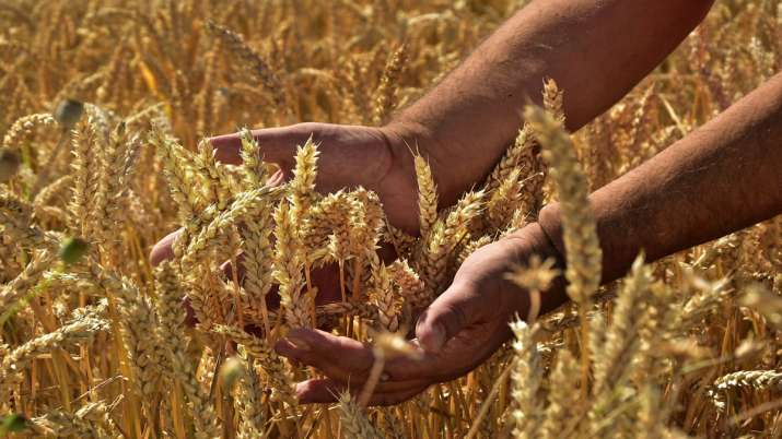 Kharif foodgrain output likely to touch record 150 mn tn this year- India TV Paisa
