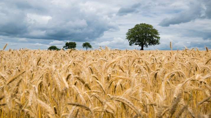 Modi Govt annonce rabi crop MSP Wheat Chana Mustard Barley Masur Minimum Support Price - India TV Paisa