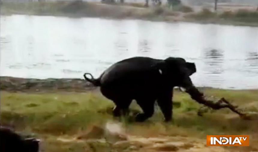 Man-killed-by-elephant-in-Karnataka- India TV Hindi