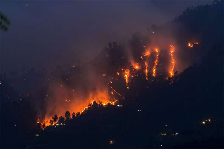 Himachal forest fire- India TV Hindi