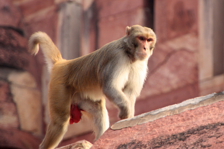 Agra: Monkey snatches Rs 2 lakh cash bag from girl at bank's entrance- India TV Hindi
