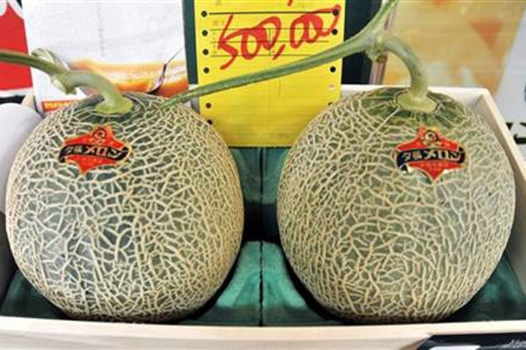 Japan: Pair of premium melons sell for record $29,300 | AP- India TV Hindi