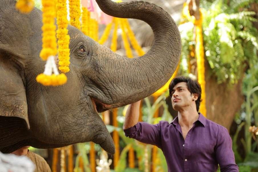 जंगली- India TV Hindi