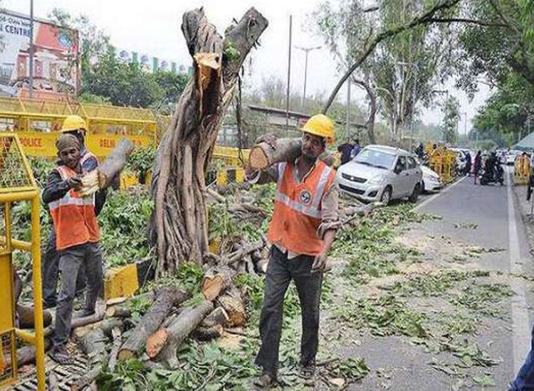 NGT stays tree felling for redevelopment project in...- India TV Hindi