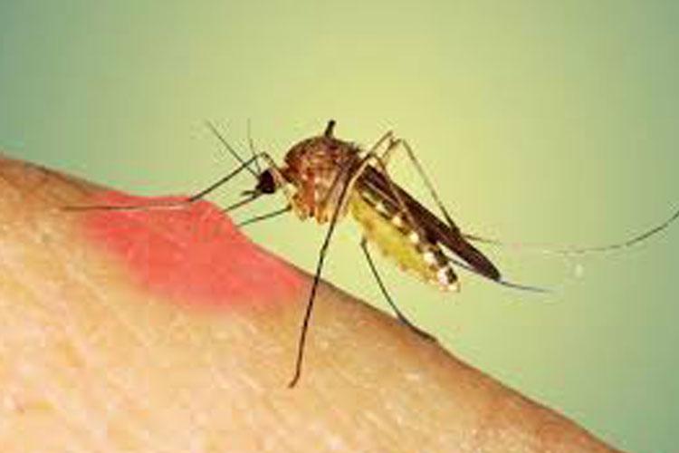 World Mosquito Day- India TV Hindi