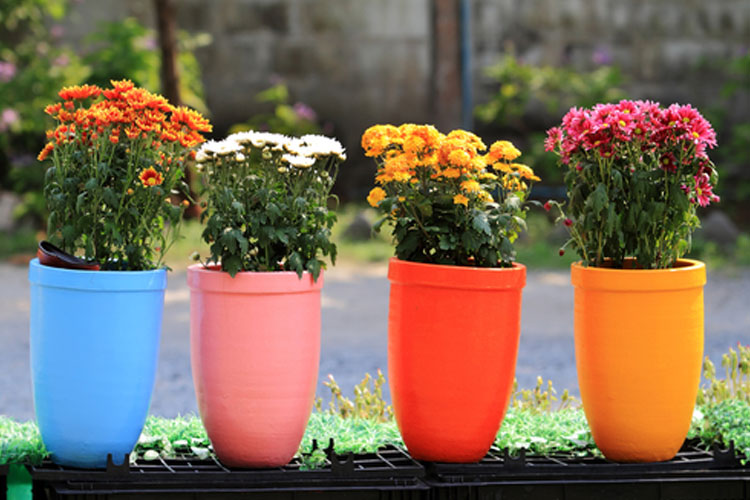 Vastu Tips about flower pot- India TV Hindi
