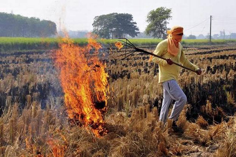 Stubble burning from Punjab, Haryana contributed to pollution in Delhi: SAFAR | PTI File- India TV Hindi