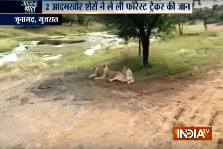 Gir forest lion attack- India TV Hindi