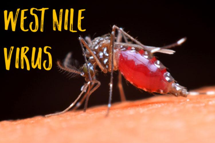 West nile fever- India TV Hindi