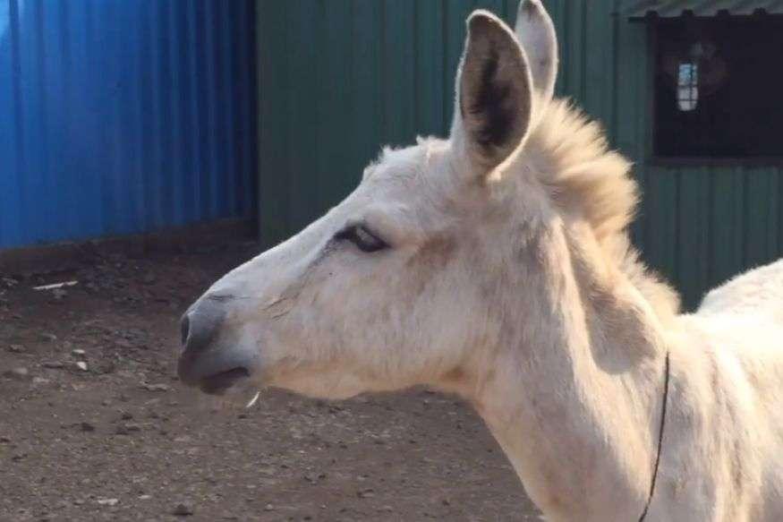 amily donkey- India TV Hindi