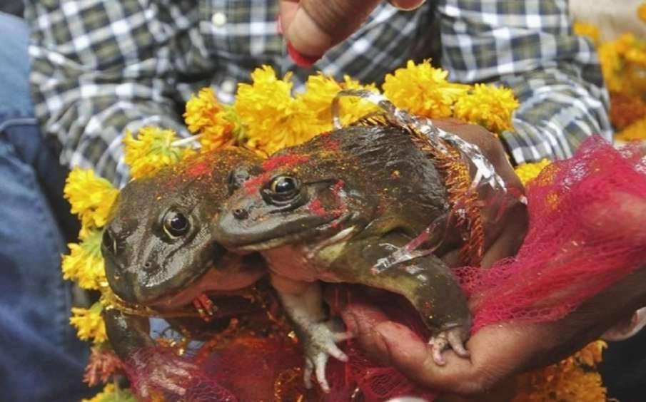 Frog- India TV Hindi