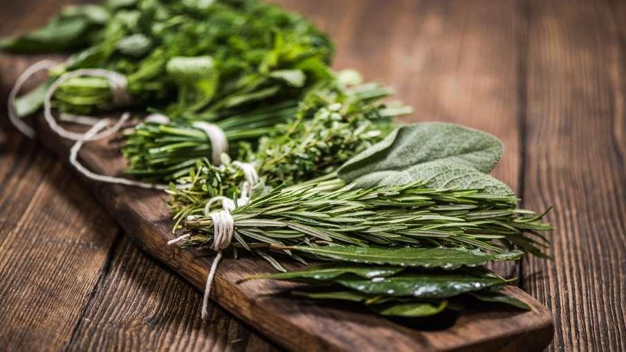 Herbs - India TV Hindi