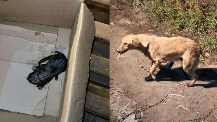 DRM Bhopal, DRM Bhopal puppies, DRM Bhopal Dog rescue, Bhopal Dog Rescue- India TV Hindi