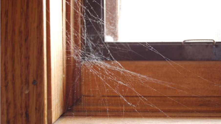 Spider web vastu tips- India TV Hindi