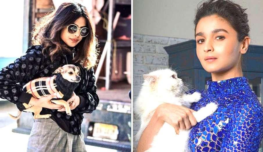 Bollywood celebs pets- India TV Hindi