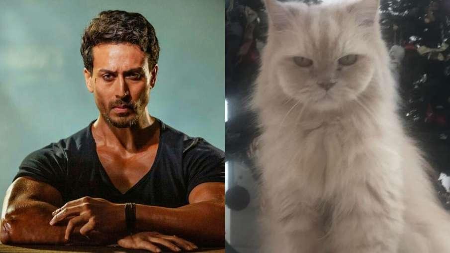 tiger shroff and his cat JD- India TV Hindi
