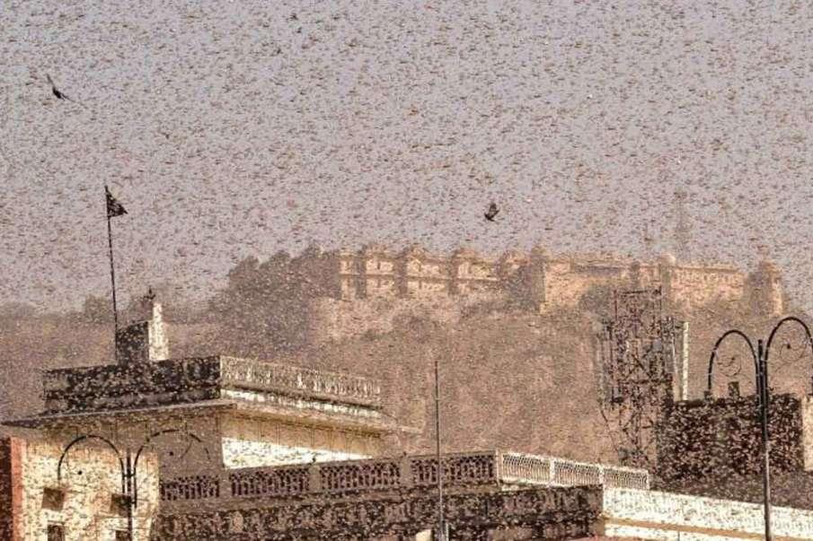 Locust- India TV Hindi