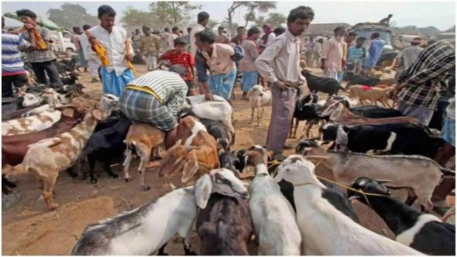 बकरीद पर कुर्बानी को लेकर हर तरफ बहस जारी है।- India TV Hindi