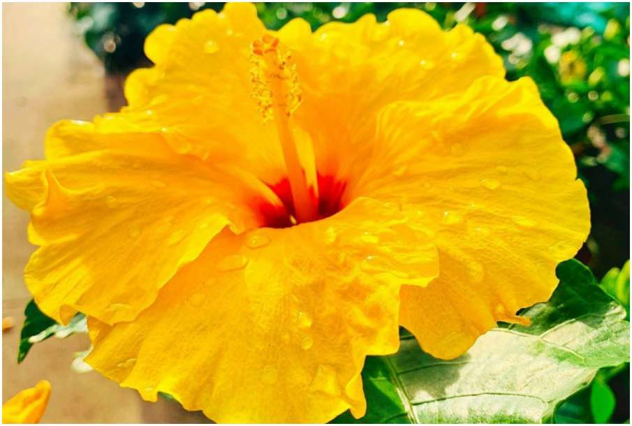 Yellow Color Flower - India TV Hindi