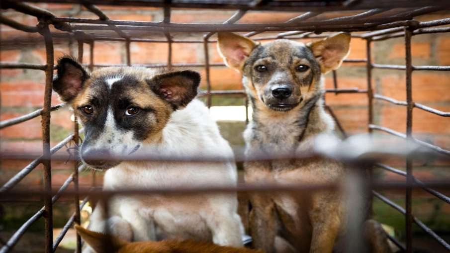 Nagaland Cabinet bans sale of dog meat- India TV Hindi