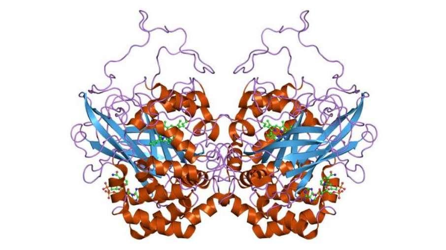 Catalase enzyme, Catalase enzyme Coronavirus, Catalase enzyme Covid-19, Catalase Coronavirus- India TV Hindi