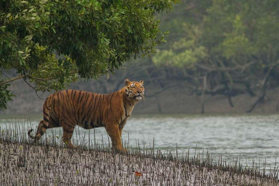 पश्चिम बंगाल में पर्यटन के लिए 23 सितंबर से खोले जाएंगे वन, मार्च से हैं बंद- India TV Hindi