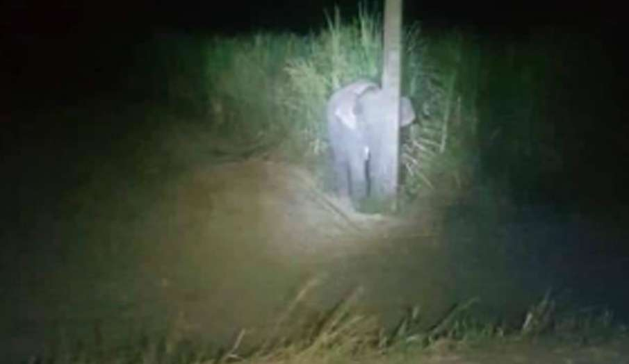 baby elephant tries to hide behind pole- India TV Hindi