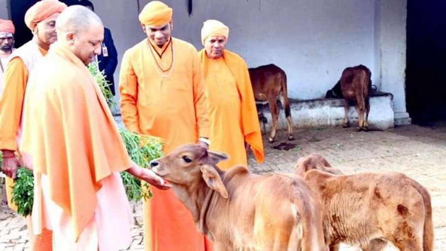 गाय को पालने के पैसे देगी योगी सरकार, किसानों को होगा फायदा- India TV Hindi