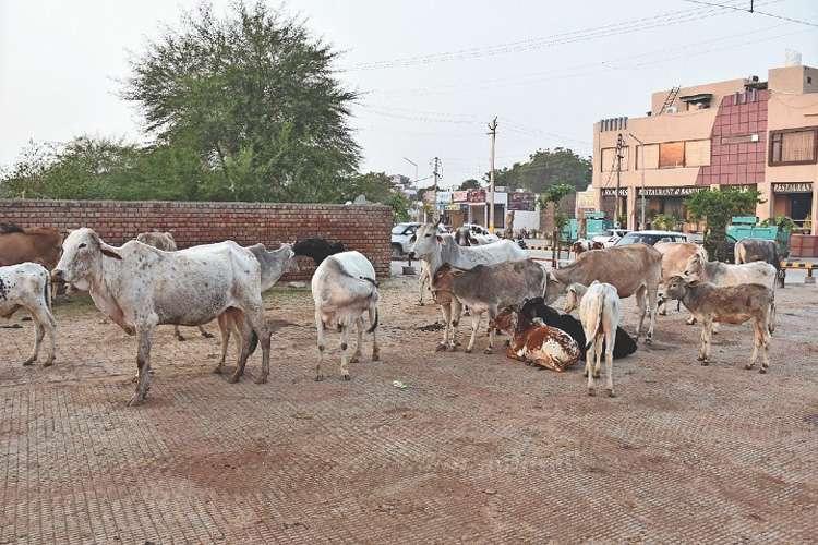UP: पशुबाड़े में मिला 7...- India TV Hindi