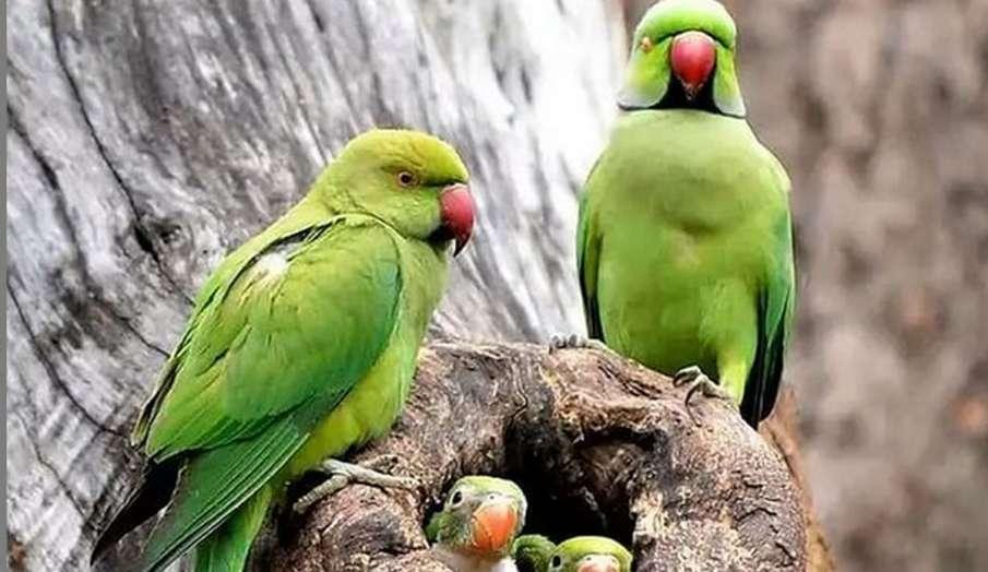 Vastu Tips: घर की इस दिशा में लगाएं तोते की तस्वीर, मिलेगा शुभ फल- India TV Hindi