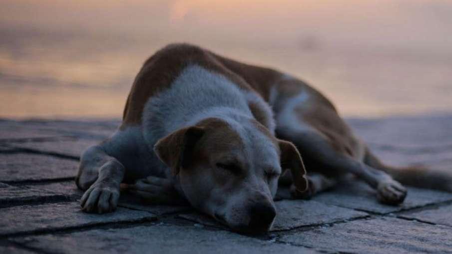 कुत्तों को खाना देने...- India TV Hindi