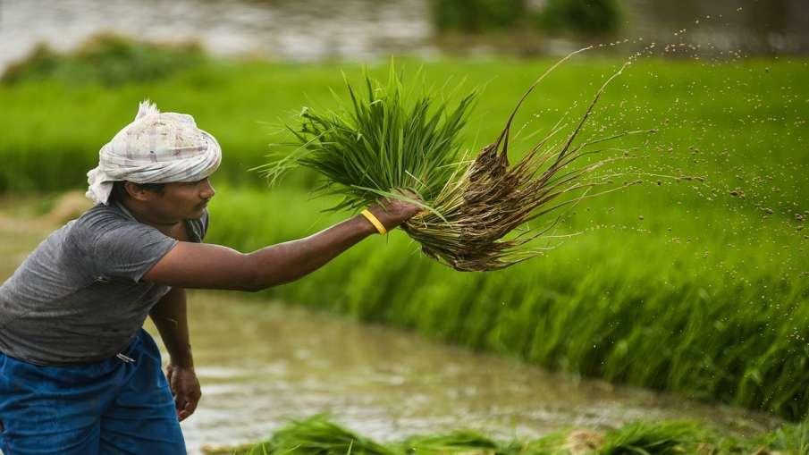 Jharkhand government decided to waive loans of nine lakh farmers । किसान आंदोलन के बीच बड़ी खबर! इस - India TV Hindi