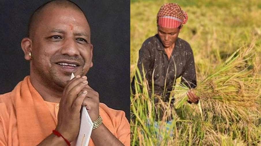 Yogi Government, Yogi Government Paddy, Yogi Government Wheat, Yogi Government MSP- India TV Hindi