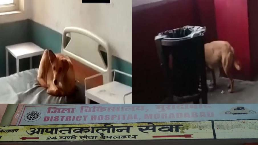 dog menace government hopital moradabad patients in fear मरीजों के बिस्तर पर कुत्ते कर रहे 'मौज', चै- India TV Hindi