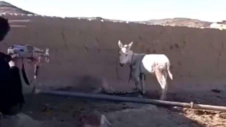 Pakistan force killing Donkey, Balochistan Donkey Killed, Pakistan Army Killing Donkey- India TV Hindi