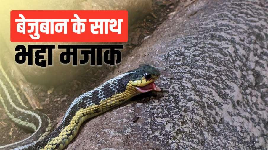 snake- India TV Hindi