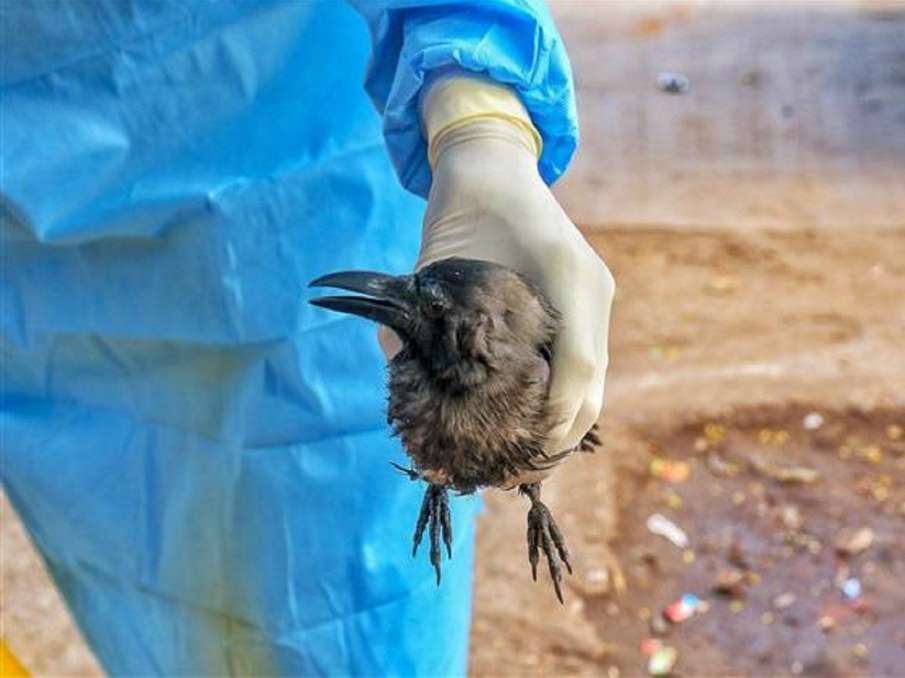 Bird flu scare in Delhi as many crows drop dead, government doctors rushed to spot- India TV Hindi