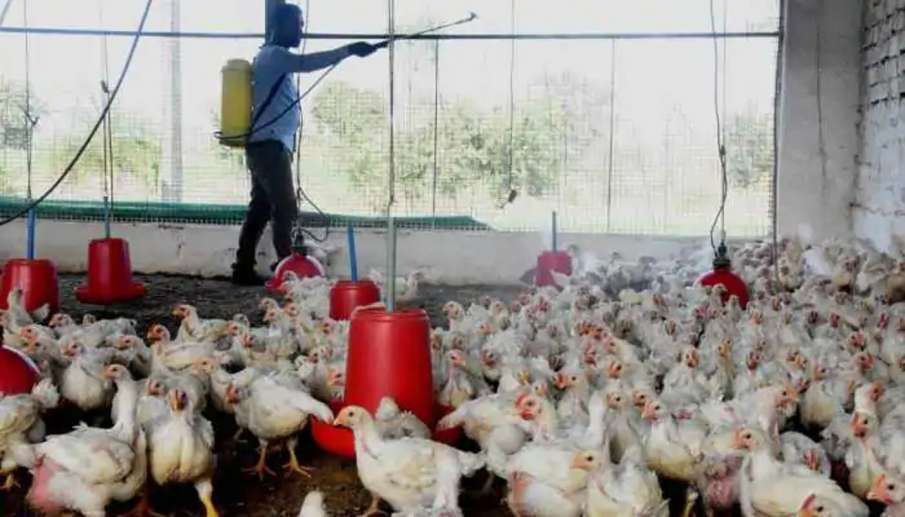 Sale of poultry products banned in Delhi; bird flu cases reported in UP- India TV Hindi
