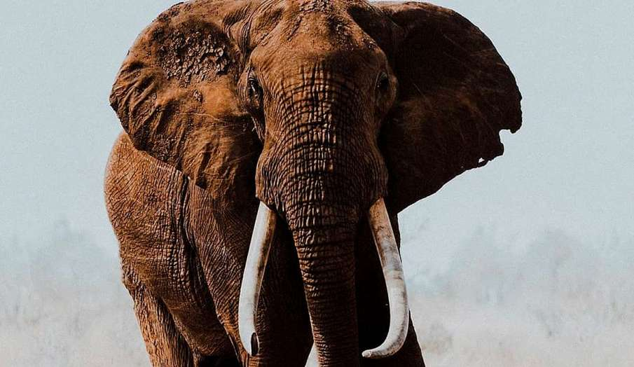 elephant death in tamil nadu- India TV Hindi