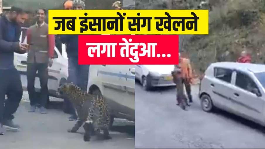 leopard himachal pradesh tirthan valley viral video जब अचानक सड़क पर आ गया तेंदुआ, पहले तो डर गए लोग- India TV Hindi