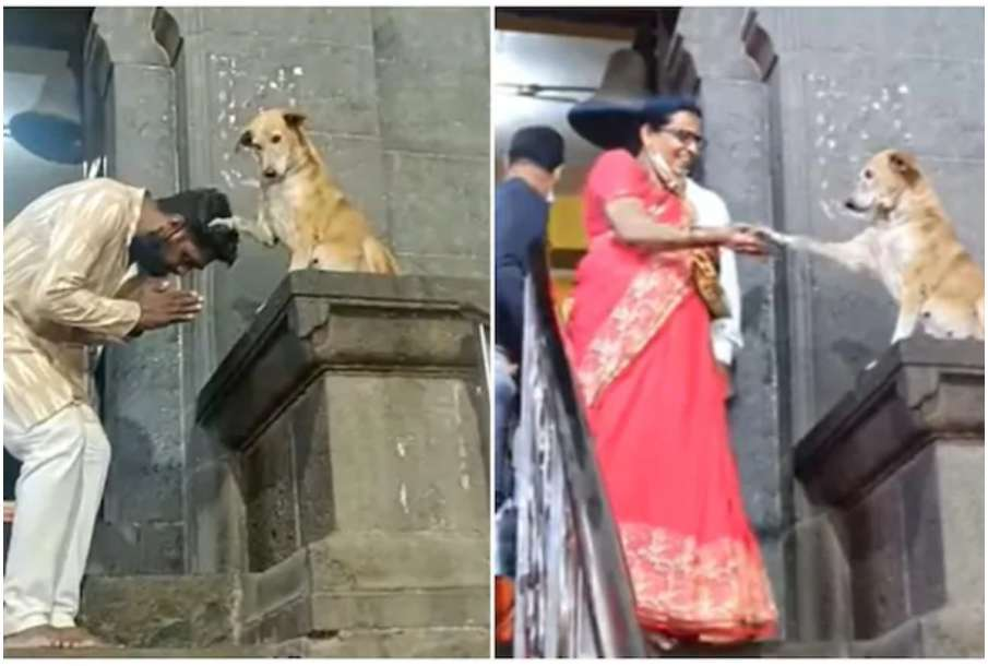 Watch Video online Siddhivinayak a dog sitting on the stairs of the temple is making headlines, सिद- India TV Hindi